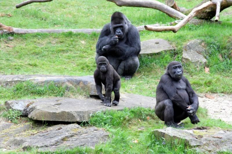 Voor aap in de apenheul - persooneelsuitje MSG
